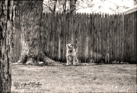 BRANDY, ACROSS THE YARD | Bethany, Oklahoma