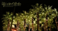 PALMS AT NIGHT | AT&T Park, San Francisco, California