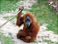 HANGIN' AROUND | Fort Worth Zoo; Fort Worth, Texas