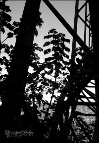 Very small part of the bridge, plus some foliage almost making a silhouette.