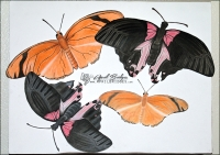 2008 - Final art project; comparison of realistic butterflies to vector style butterflies.